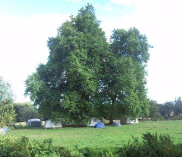 Dechen Choling Tree