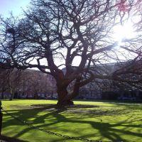 Firm Tree